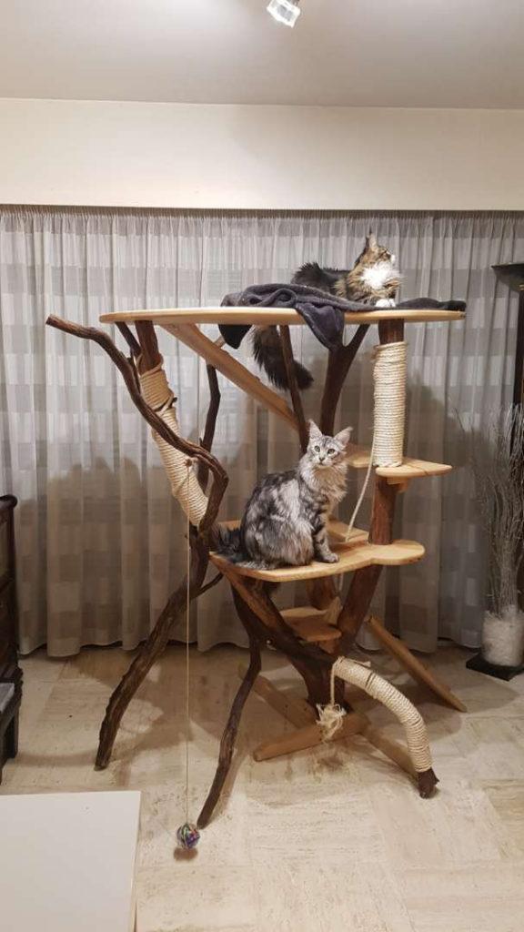 arbre à chat brut fait main