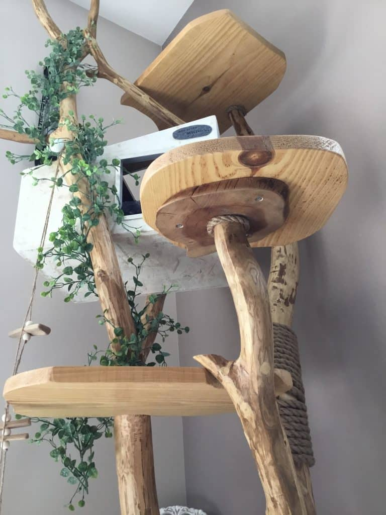 arbre a chat français feuillu