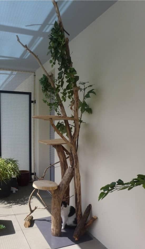 arbre a chat français feuillu branches