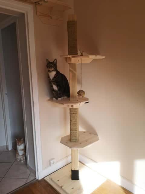 arbre a chat français octogonal