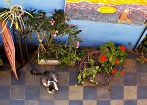 chat carrelage jardin plantes