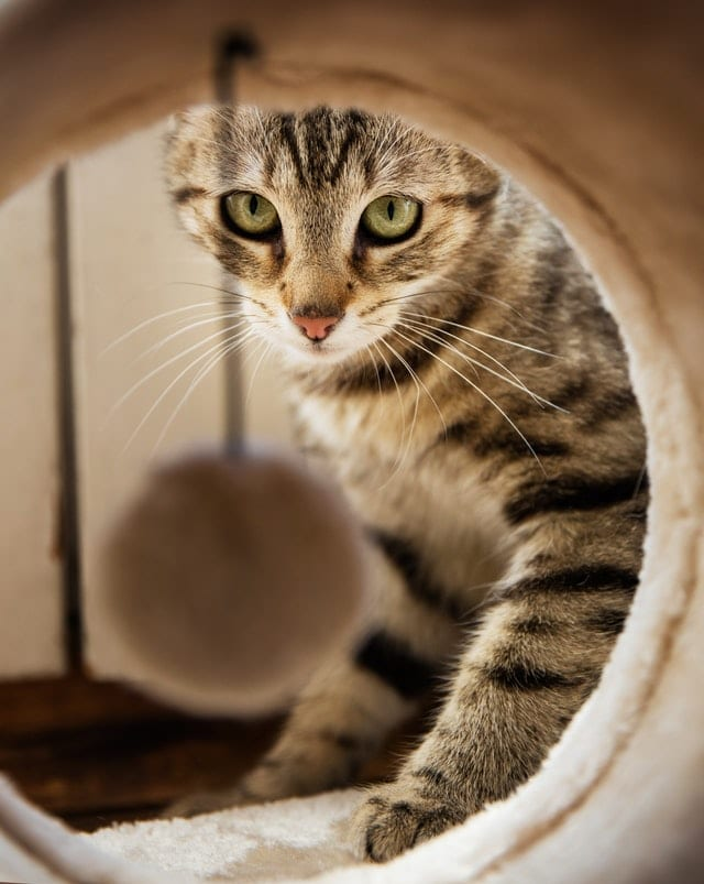 chat exterieur tunnel