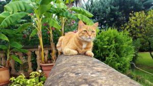 chat mur pierre jardin