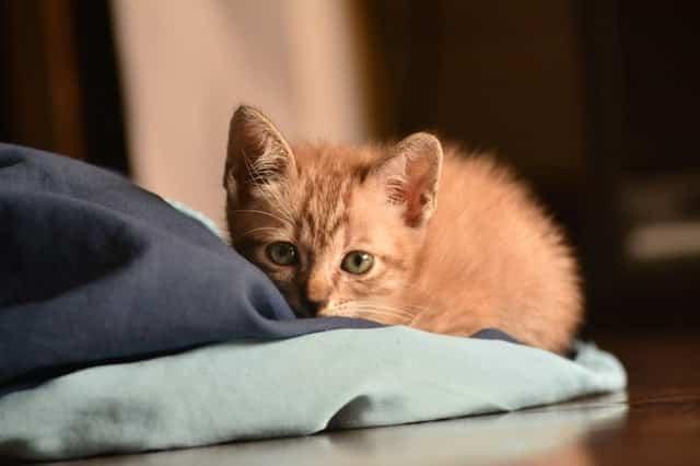 chat oreiller bleu vert
