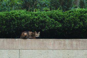 chat sous des buissons