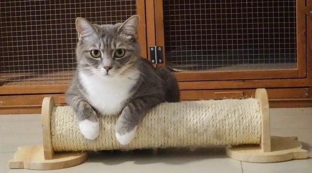 chat sur griffoir