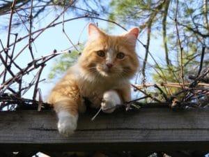 chat sur un mur