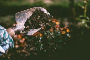 jardin pelle terre