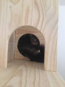 niche bois tunnel