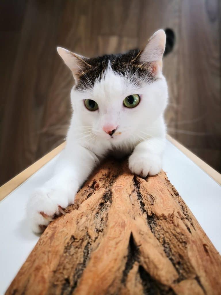 panneau chat griffoir bois brut