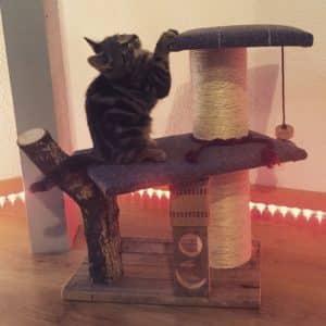petit arbre à chat français atelier familial