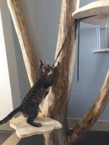 arbre à chat 3 troncs plateformes