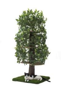arbre à chat feuilles tronc