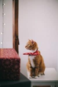 chat bandana rouge
