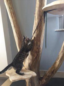 chat sur vrai arbre griffoir
