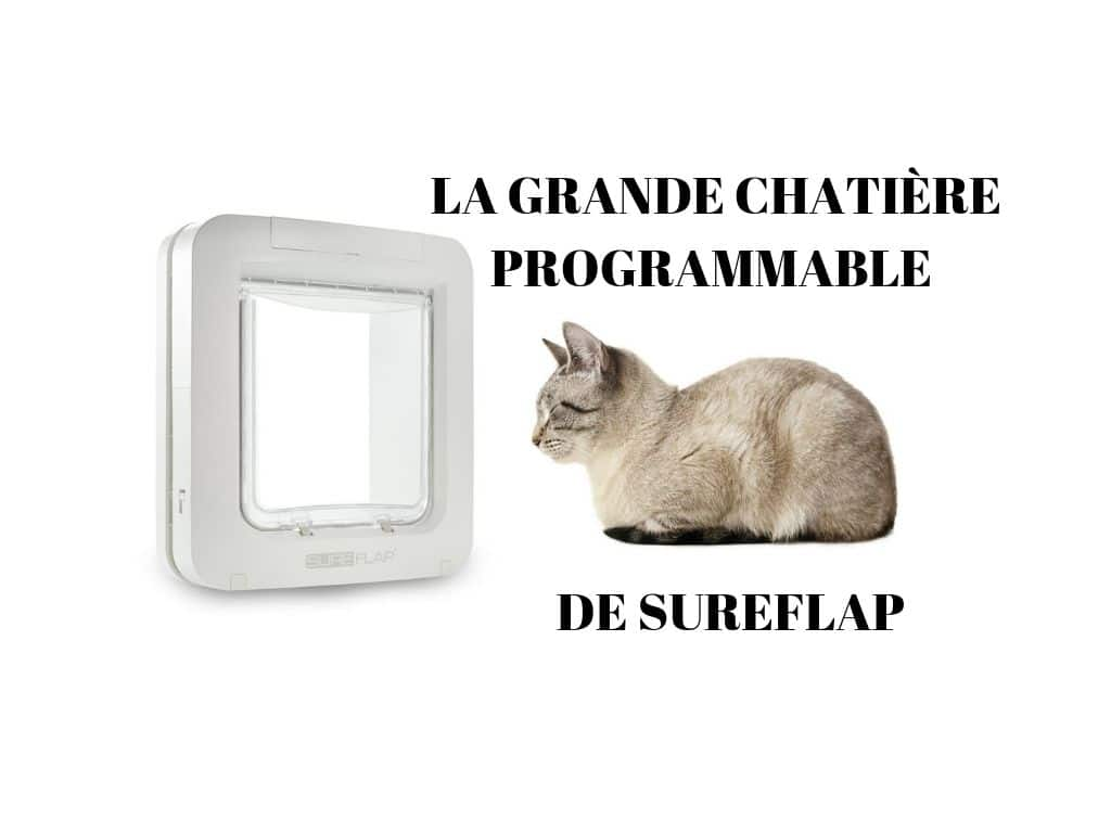 Chatière horaire programmable