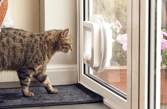 chat devant chatière sureflap original