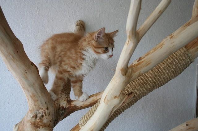 arbre chat tronc fait main