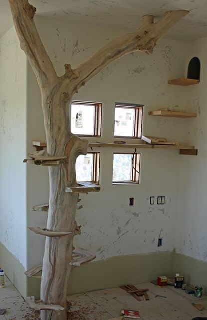arbre naturel bois tronc branche
