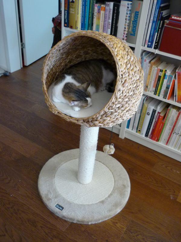 arbre à chat cocon bananier coussin
