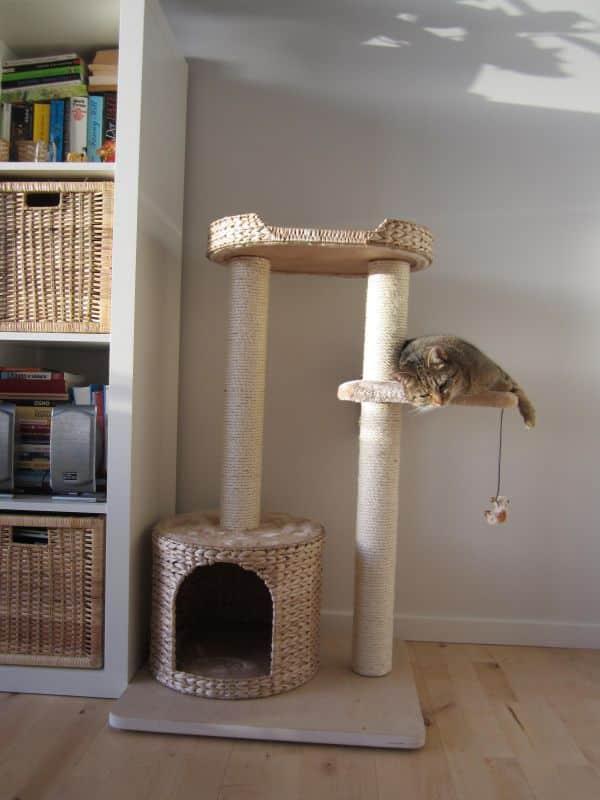 arbre à chat moyen jacinthe niche