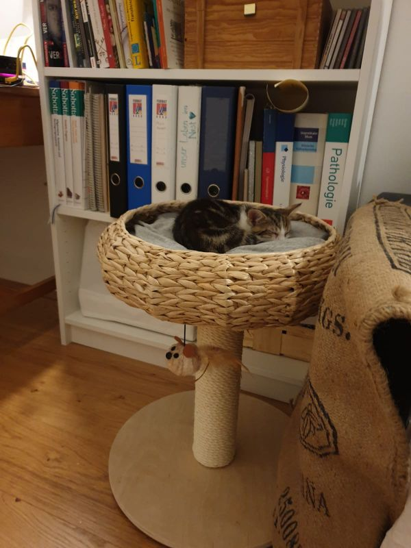 arbre à chat petit module rond jacinthe