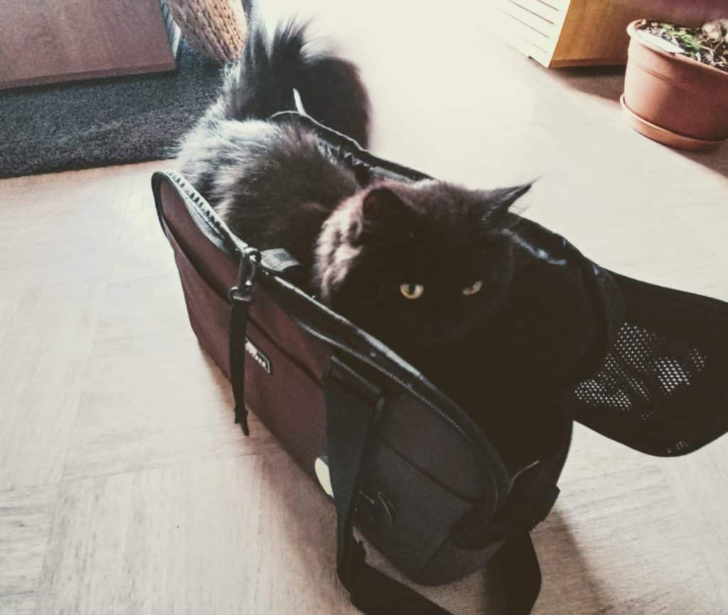 chat dans sac de transport