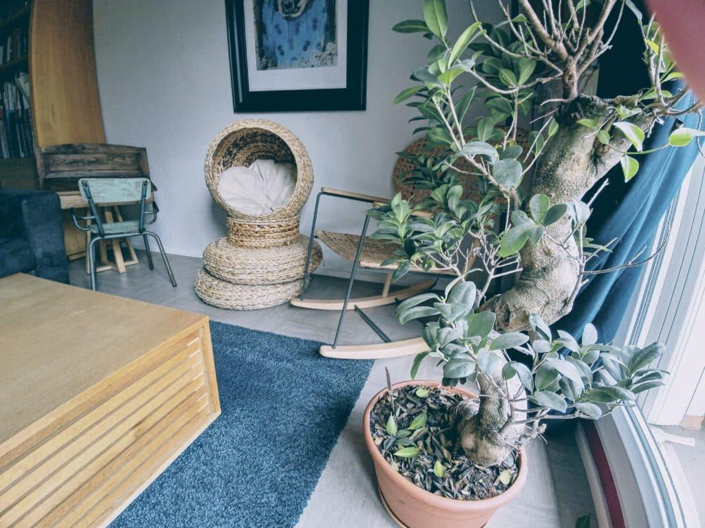 petit arbre à chat bananier salon