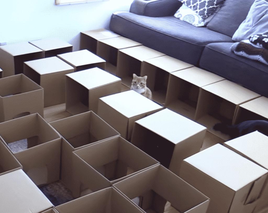 terrain jeu carton chat