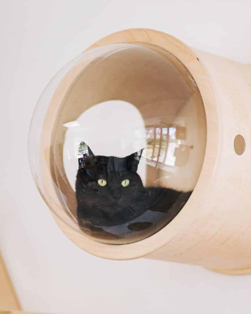 capsule niche hublot chat