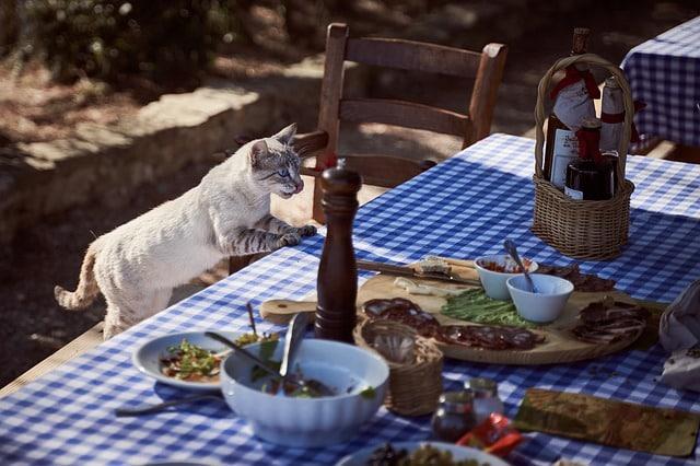 chat nourriture quantité