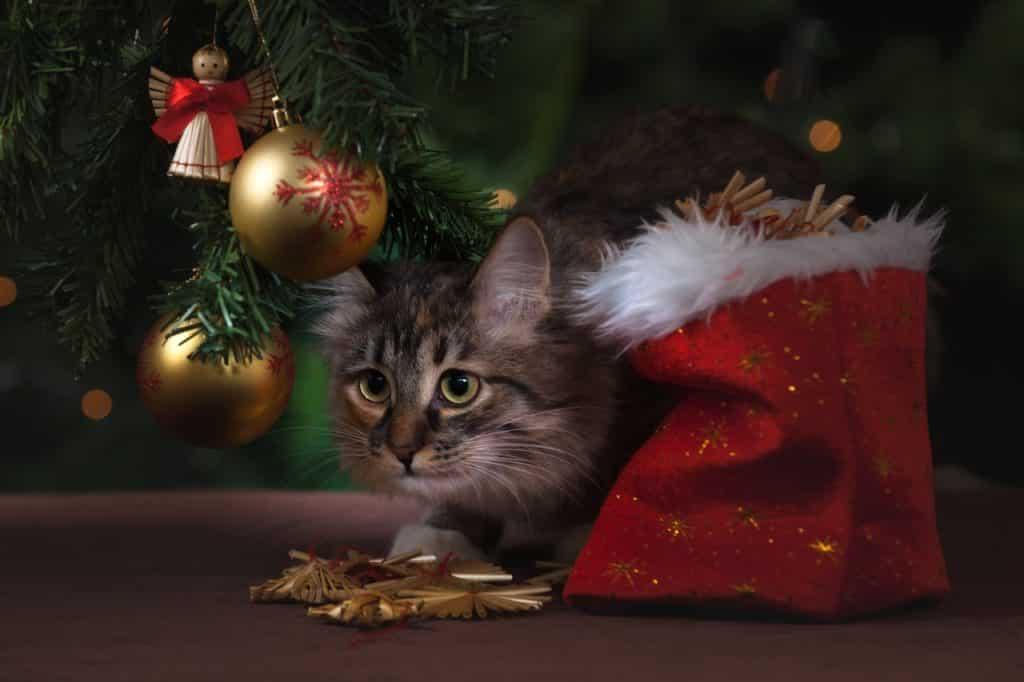 noel fête cadeau chat
