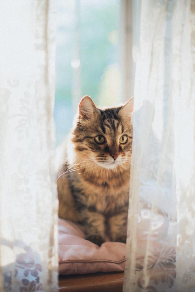 chat santé forme bien être
