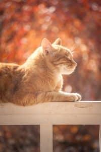 chat a cote maison