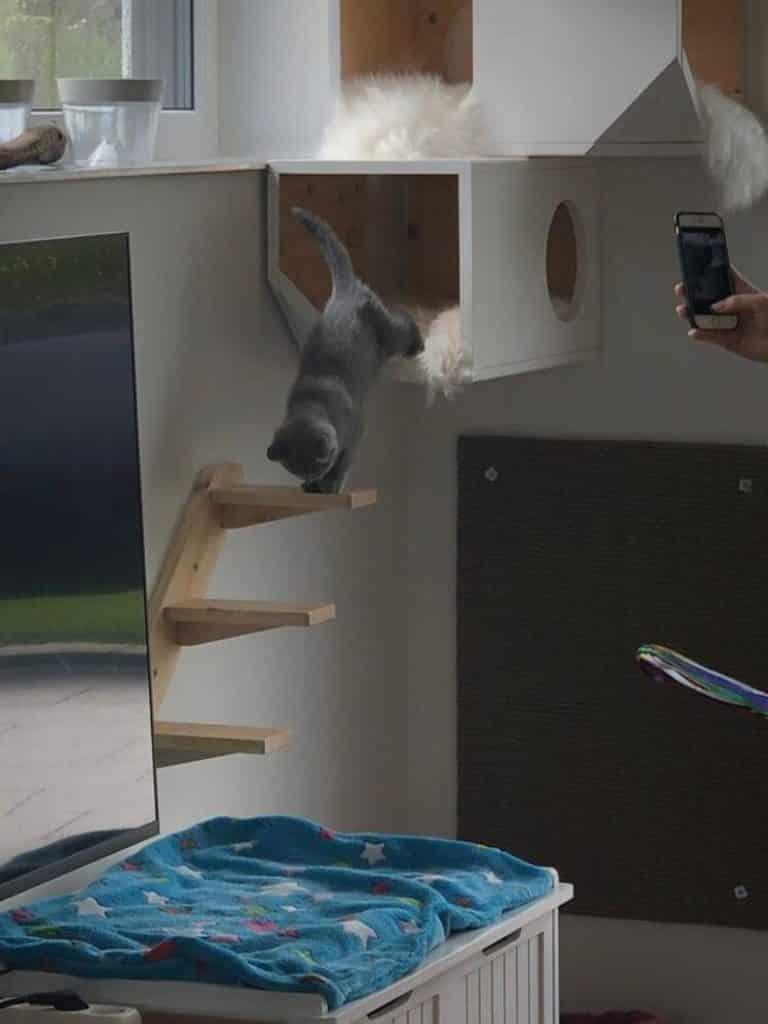 bahut pour chat à fixer au mur