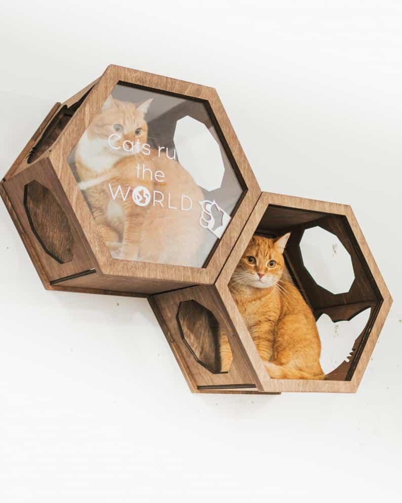 hexagone mural pour chat fenetre