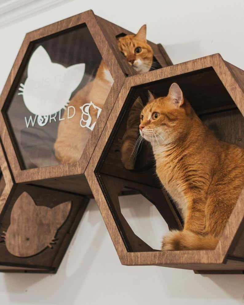 hexagone murale pour chat decoration vitre