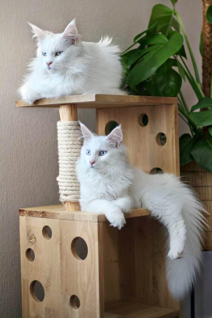 arbre a chat cube bois en chene