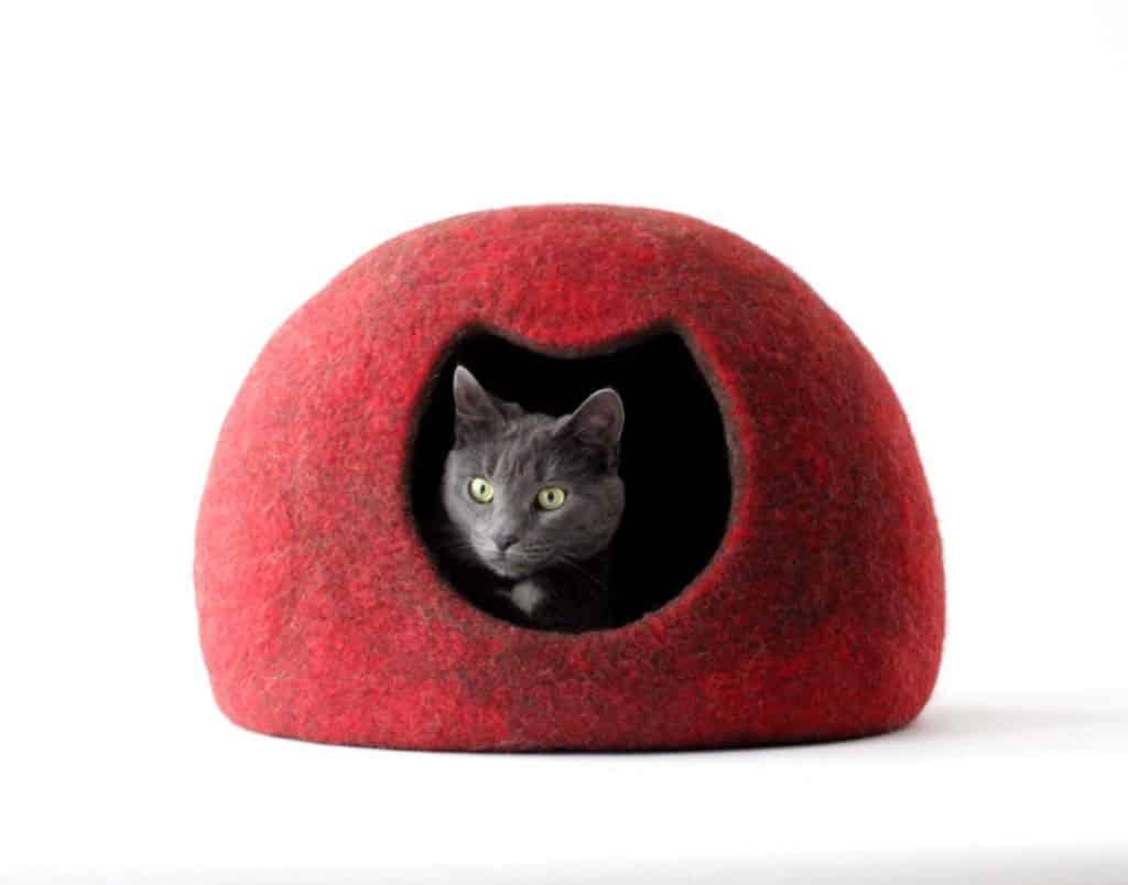 comment trouver une grotte pour son chat