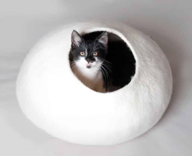 grotte chat blanc uni