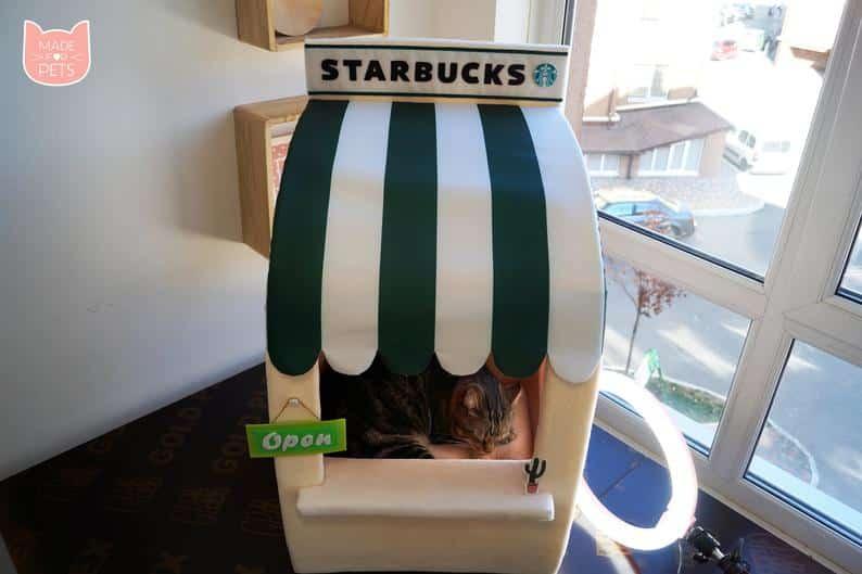 grotte chat starbucks