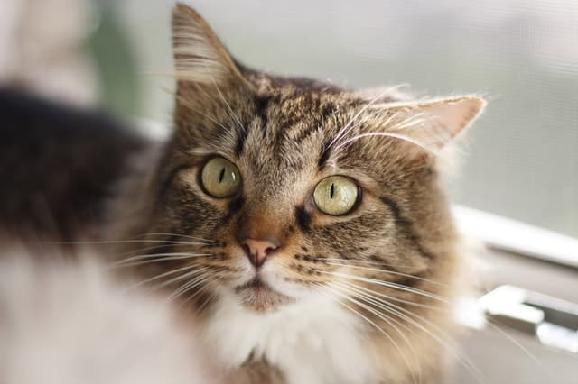 profil héréditaire du chat