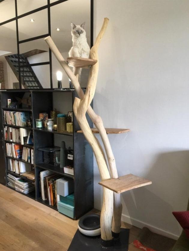 arbre a chat bois naturel enchevetre