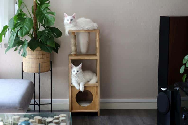 arbre a chat francais bois lamelle