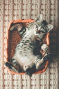 offrir un lieu de couchage a son chat