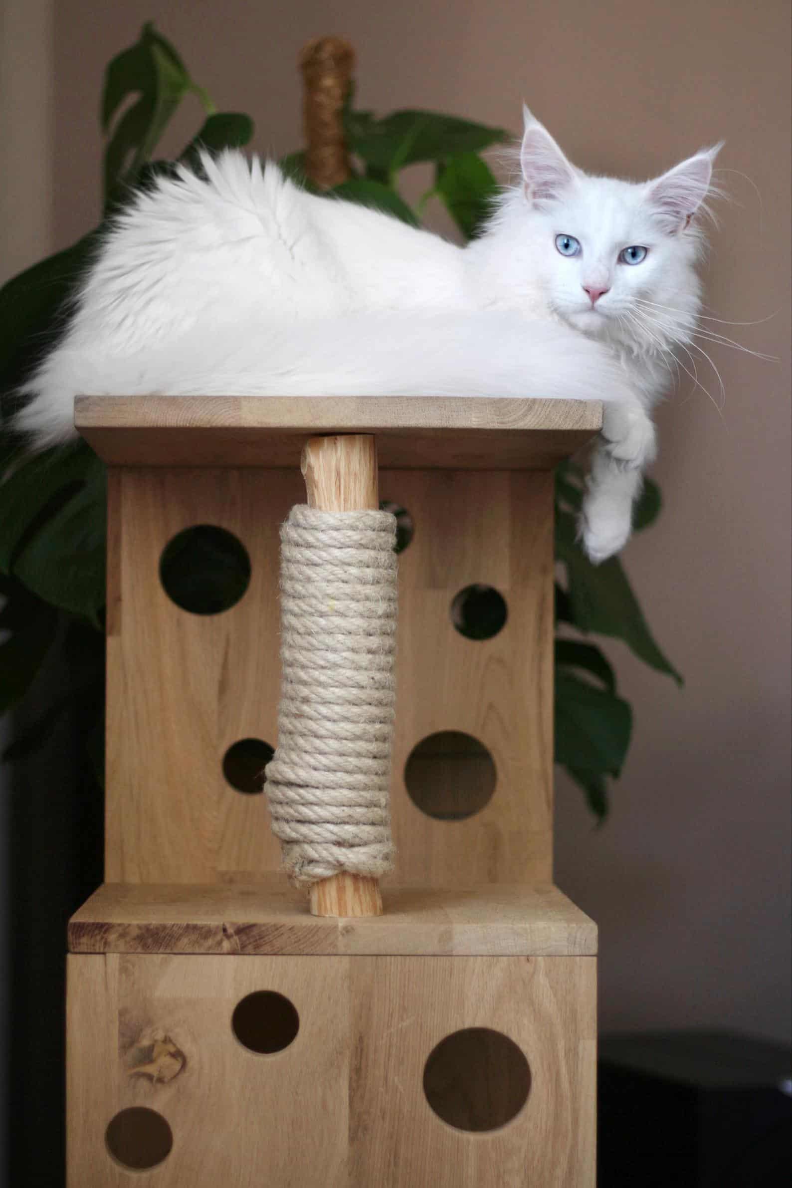 petit arbre a chat scandinave en cube