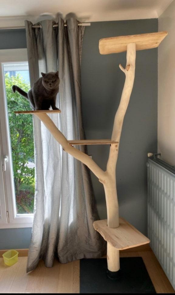 veritable bois d'arbre a chat