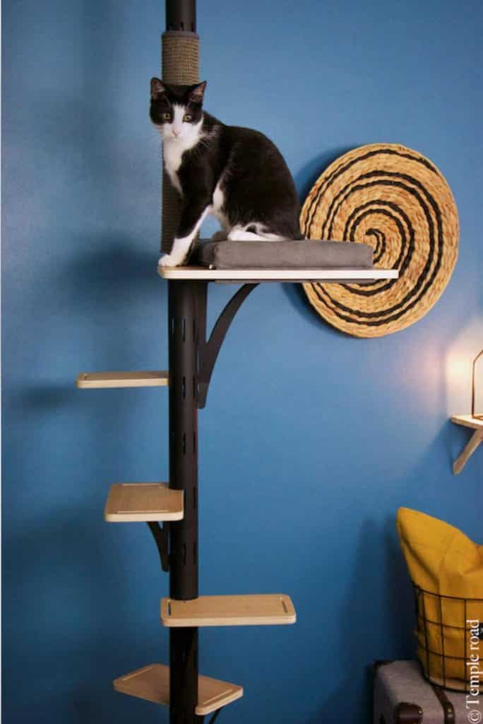 arbre a chat de style moderne