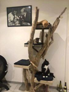 arbre a chat becquet