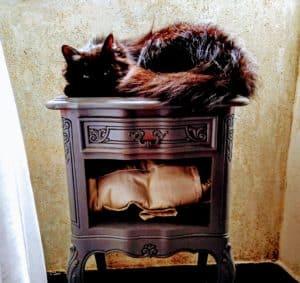 sommeil du chat